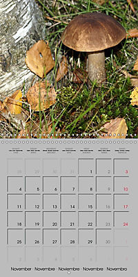 Looking for mushrooms (Wall Calendar 2019 300 × 300 mm Square) - Produktdetailbild 11