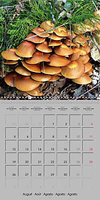 Looking for mushrooms (Wall Calendar 2019 300 × 300 mm Square) - Produktdetailbild 8