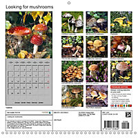 Looking for mushrooms (Wall Calendar 2019 300 × 300 mm Square) - Produktdetailbild 13