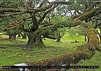 Lorbeerbäume (Wandkalender 2019 DIN A3 quer) - Produktdetailbild 1