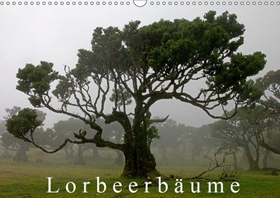 Lorbeerbäume (Wandkalender 2019 DIN A3 quer), Klaus Lielischkies
