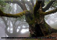 Lorbeerbäume (Wandkalender 2019 DIN A3 quer) - Produktdetailbild 2