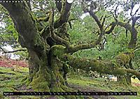 Lorbeerbäume (Wandkalender 2019 DIN A3 quer) - Produktdetailbild 4