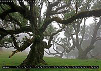 Lorbeerbäume (Wandkalender 2019 DIN A3 quer) - Produktdetailbild 7