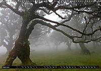 Lorbeerbäume (Wandkalender 2019 DIN A3 quer) - Produktdetailbild 6