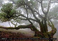 Lorbeerbäume (Wandkalender 2019 DIN A3 quer) - Produktdetailbild 10