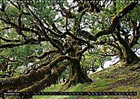 Lorbeerbäume (Wandkalender 2019 DIN A3 quer) - Produktdetailbild 11