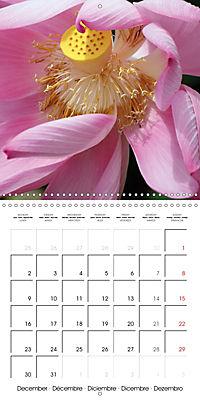 Lotus Flower - Mystical Beauty (Wall Calendar 2019 300 × 300 mm Square) - Produktdetailbild 12