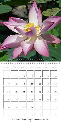 Lotus Flower - Mystical Beauty (Wall Calendar 2019 300 × 300 mm Square) - Produktdetailbild 1