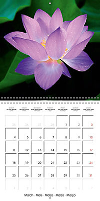 Lotus Flower - Mystical Beauty (Wall Calendar 2019 300 × 300 mm Square) - Produktdetailbild 3