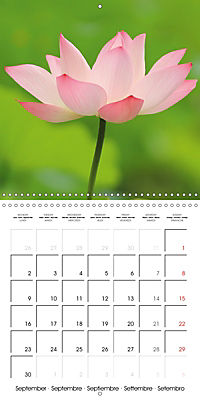 Lotus Flower - Mystical Beauty (Wall Calendar 2019 300 × 300 mm Square) - Produktdetailbild 9