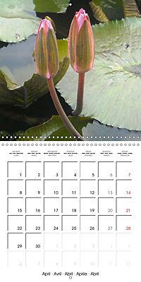 Lotus Flower - Mystical Beauty (Wall Calendar 2019 300 × 300 mm Square) - Produktdetailbild 4