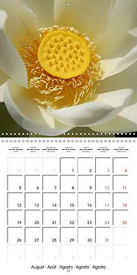Lotus Flower - Mystical Beauty (Wall Calendar 2019 300 × 300 mm Square) - Produktdetailbild 8