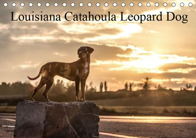 Louisiana Catahoula Leopard Dog 2019 (Tischkalender 2019 DIN A5 quer), Catahouligan on Tour