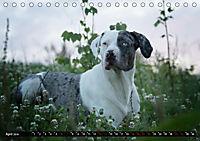 Louisiana Catahoula Leopard Dog 2019 (Tischkalender 2019 DIN A5 quer) - Produktdetailbild 4