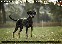 Louisiana Catahoula Leopard Dog 2019 (Tischkalender 2019 DIN A5 quer) - Produktdetailbild 2
