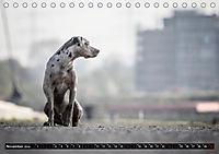 Louisiana Catahoula Leopard Dog 2019 (Tischkalender 2019 DIN A5 quer) - Produktdetailbild 11