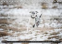 Louisiana Catahoula Leopard Dog 2019 (Tischkalender 2019 DIN A5 quer) - Produktdetailbild 1