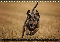 Louisiana Catahoula Leopard Dog 2019 (Tischkalender 2019 DIN A5 quer) - Produktdetailbild 8
