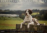 Louisiana Catahoula Leopard Dog 2019 (Tischkalender 2019 DIN A5 quer) - Produktdetailbild 6