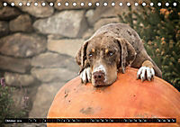 Louisiana Catahoula Leopard Dog 2019 (Tischkalender 2019 DIN A5 quer) - Produktdetailbild 10
