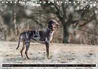 Louisiana Catahoula Leopard Dog 2019 (Tischkalender 2019 DIN A5 quer) - Produktdetailbild 12