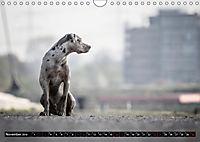 Louisiana Catahoula Leopard Dog 2019 (Wandkalender 2019 DIN A4 quer) - Produktdetailbild 11
