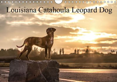 Louisiana Catahoula Leopard Dog 2019 (Wandkalender 2019 DIN A4 quer), Catahouligan on Tour