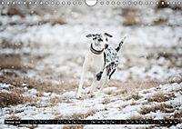 Louisiana Catahoula Leopard Dog 2019 (Wandkalender 2019 DIN A4 quer) - Produktdetailbild 1