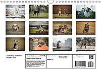 Louisiana Catahoula Leopard Dog 2019 (Wandkalender 2019 DIN A4 quer) - Produktdetailbild 13