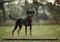 Louisiana Catahoula Leopard Dog 2019 (Wandkalender 2019 DIN A3 quer) - Produktdetailbild 2