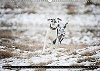 Louisiana Catahoula Leopard Dog 2019 (Wandkalender 2019 DIN A3 quer) - Produktdetailbild 1