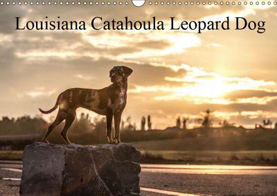 Louisiana Catahoula Leopard Dog 2019 (Wandkalender 2019 DIN A3 quer), Catahouligan on Tour