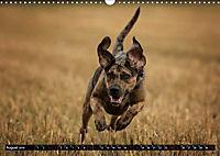 Louisiana Catahoula Leopard Dog 2019 (Wandkalender 2019 DIN A3 quer) - Produktdetailbild 8