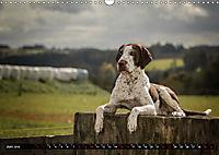 Louisiana Catahoula Leopard Dog 2019 (Wandkalender 2019 DIN A3 quer) - Produktdetailbild 6