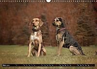 Louisiana Catahoula Leopard Dog 2019 (Wandkalender 2019 DIN A3 quer) - Produktdetailbild 3