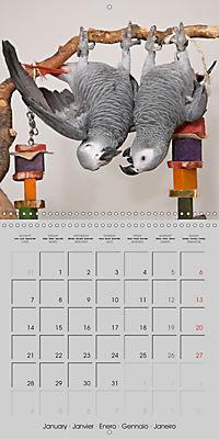 Lovely African Greys (Wall Calendar 2019 300 × 300 mm Square) - Produktdetailbild 1