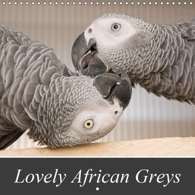 Lovely African Greys (Wall Calendar 2019 300 × 300 mm Square), Nadine Keller