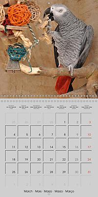 Lovely African Greys (Wall Calendar 2019 300 × 300 mm Square) - Produktdetailbild 3