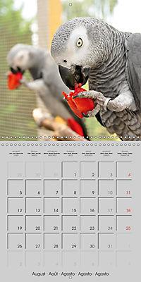 Lovely African Greys (Wall Calendar 2019 300 × 300 mm Square) - Produktdetailbild 8