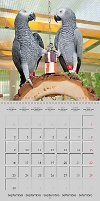Lovely African Greys (Wall Calendar 2019 300 × 300 mm Square) - Produktdetailbild 9
