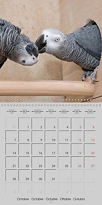 Lovely African Greys (Wall Calendar 2019 300 × 300 mm Square) - Produktdetailbild 10