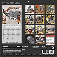 Lovely African Greys (Wall Calendar 2019 300 × 300 mm Square) - Produktdetailbild 13