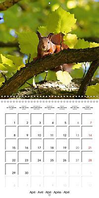Lovely Squirrel (Wall Calendar 2019 300 × 300 mm Square) - Produktdetailbild 4