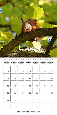 Lovely Squirrel (Wall Calendar 2019 300 × 300 mm Square) - Produktdetailbild 4