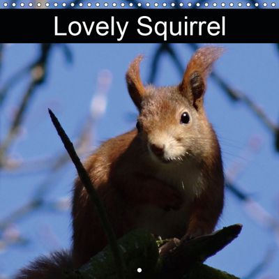 Lovely Squirrel (Wall Calendar 2019 300 × 300 mm Square), kattobello