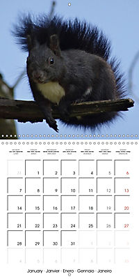 Lovely Squirrel (Wall Calendar 2019 300 × 300 mm Square) - Produktdetailbild 1