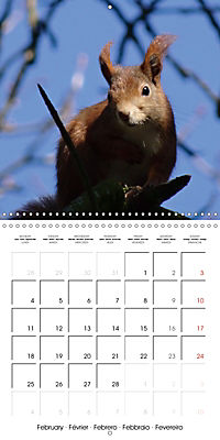 Lovely Squirrel (Wall Calendar 2019 300 × 300 mm Square) - Produktdetailbild 2