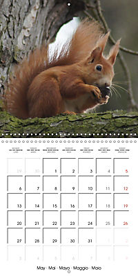 Lovely Squirrel (Wall Calendar 2019 300 × 300 mm Square) - Produktdetailbild 5