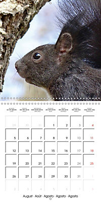 Lovely Squirrel (Wall Calendar 2019 300 × 300 mm Square) - Produktdetailbild 8